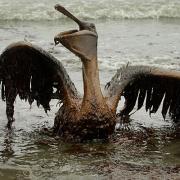 Oil Spill Prayer –  Idea Thumbnail